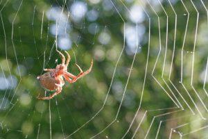 Ý nghĩa của hình tượng nhện trong phong thủy